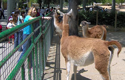 Visit the best leisure parks in Barcelona. Information about the Barcelona Zoo